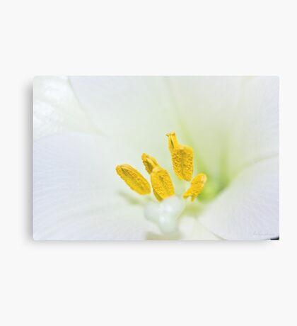 Yellow & White Canvas Print