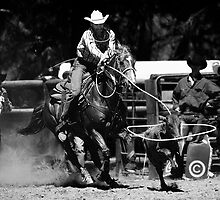 Broncos and Bulls # 4 by Paul Amyes