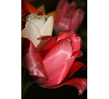 Tulips from Amsterdam Photographic Print