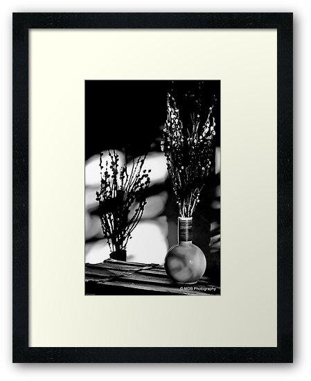 Shadow Bloom by Mark David Barrington