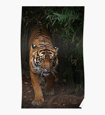 Tiger Might Poster