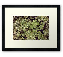 Psychedelic Leafs   Framed Print