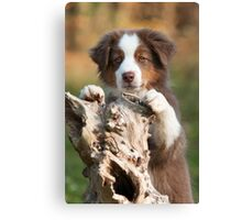 Curious Aussie Puppy Canvas Print