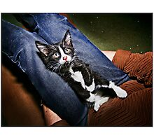 This is Glen. Tell me he's not the cutest!  Photographic Print