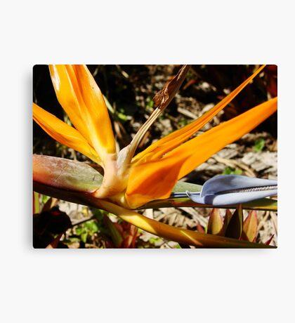 Bright Orange Bird of Paradise-(Macro) Canvas Print