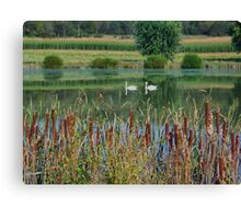 Swans On A Mennonite Farm Canvas Print