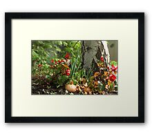small garden Framed Print
