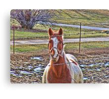 Friendly Farm Horse Canvas Print