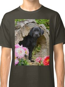 Lab puppy playing hide and seek Classic T-Shirt
