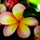 Tropical Dream by Louise Linossi Telfer