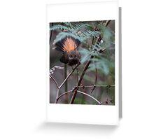 Rufous Fantail Greeting Card