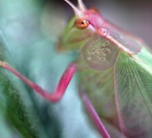 Grasshopper Colours by yolanda