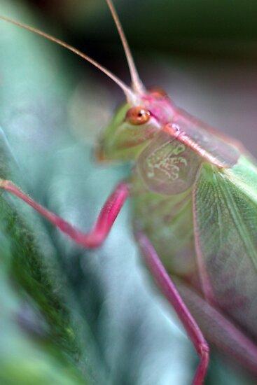 Grasshopper Colours by yolanda