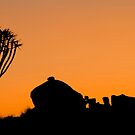 Quiver Silhouette - Namibia Africa by Beth  Wode
