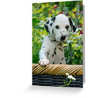 Hey, I`m a Dalmatian puppy Greeting Card