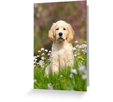 Goldie Puppy Greeting Card
