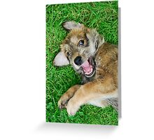 - Giggle - Berger Picard puppy Greeting Card