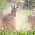 What's the Hurry Boys? - Kruger NP South Africa by Beth  Wode