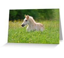 Foal in a sea of tall grass Greeting Card
