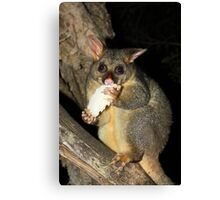 Brush Tailed Possum Canvas Print