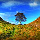 Hadrians Wall Tree by Reinhardt