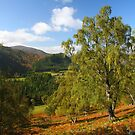 Overlooking lovely Deeside by christopher363