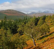 Autumn colours of Royal Deeside by christopher363