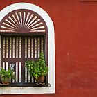 Window, Fontainhas, Panaji, Goa by Rachel  Devenish Ford