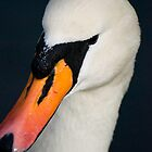 Swan Portrait by Brett Still