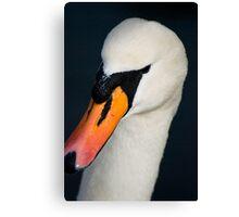 Swan Portrait Canvas Print