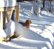 Found The Stairs!  Under the Snow- Rosie '10 by goldnzrule