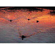 The Early Birds Photographic Print