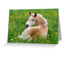 Haflinger foal resting amidst buttercup flowers Greeting Card