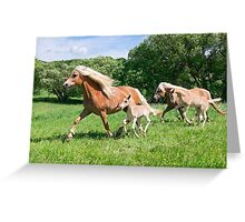 Running together, Haflinger with foals Greeting Card