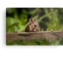 Field Mouse Eating Metal Print
