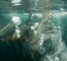 Bubblefest - Sea Lions at play by lgraham