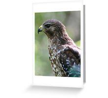 Red Shouldered Hawk Greeting Card