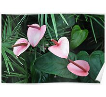 Botanicals Plate # 2 Poster