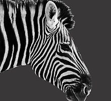 Black & White or White & Black? Etosha NP Namibia by Beth  Wode