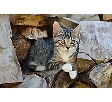 Cutie kitten on a wood pile Photographic Print