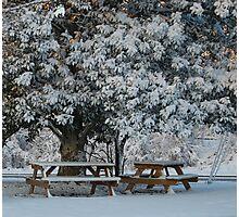 White Magnolia Tree Photographic Print