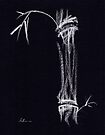 'Apparition'  ghostly bamboo drawing in chalk pencil by Rebecca Rees