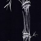 &#x27;Apparition&#x27;  ghostly bamboo drawing in chalk pencil by Rebecca Rees
