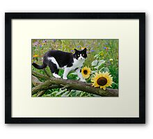 Tuxedo cat and sunflowers Framed Print