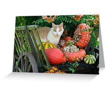 Cat and pumkins Greeting Card