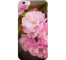 Cherry Blossoms in Bloom in New York City iPhone Case/Skin