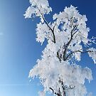 Frosted Beauty by lorilee