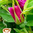 Valentine Rose Bud and a Cup of Hot Chocolate by MaeBelle