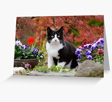 Tuxedo cat in front of a Japanese Maple Greeting Card