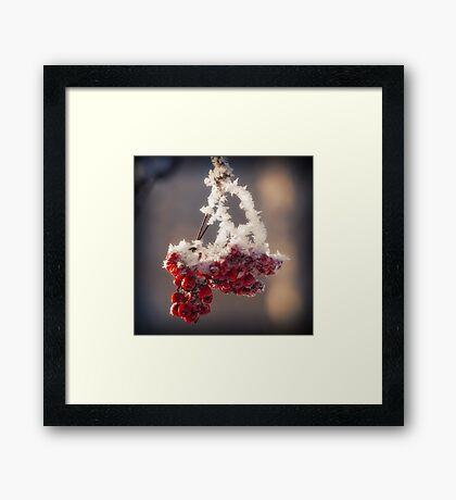 Berries in Ice Framed Print